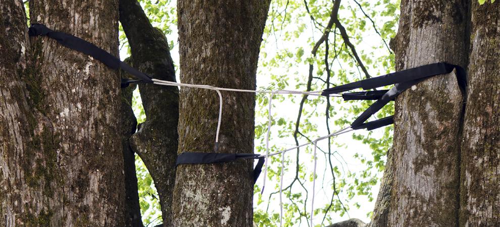 Baltimore Tree Cabling and Bracing