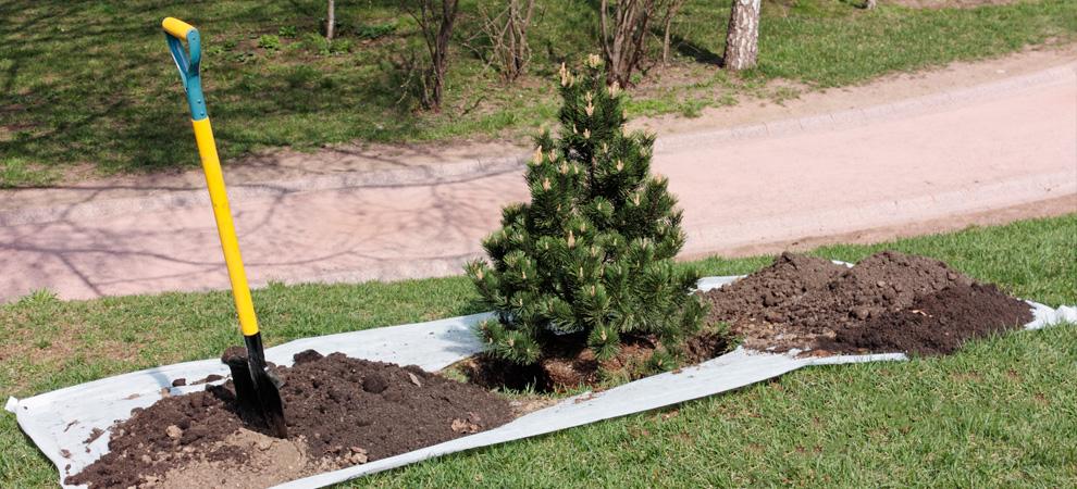 Towson Tree Planting