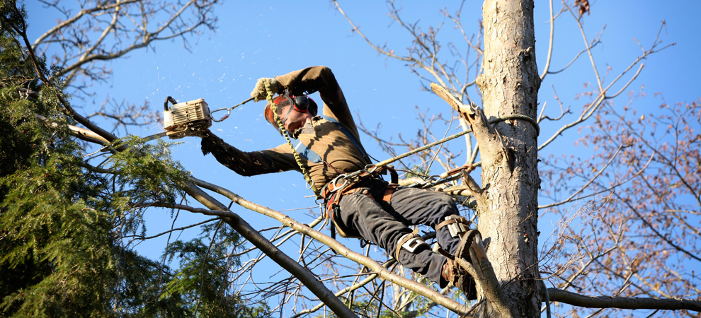 Columbia Tree Pruning