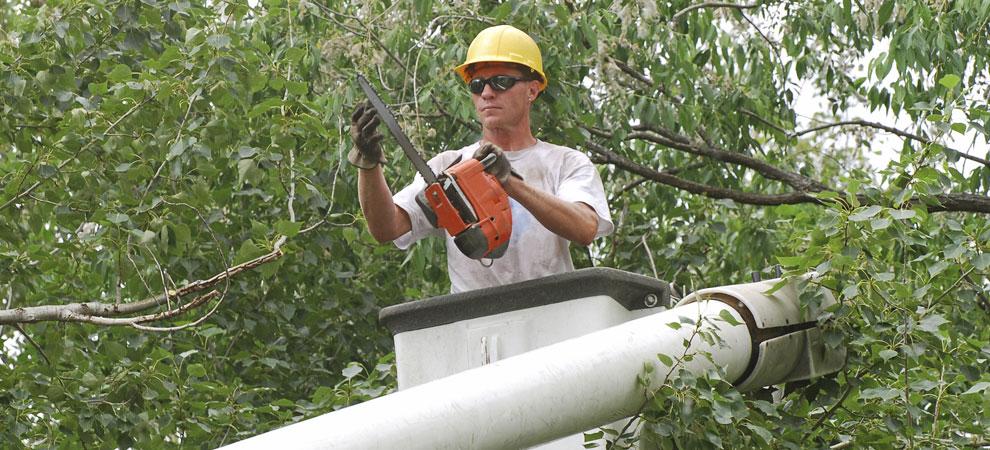 Columbia Tree Service